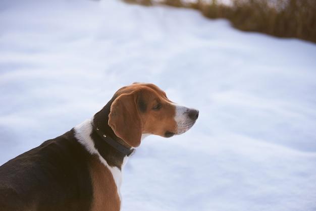 Hunter hond in de sneeuw