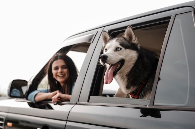 Husky gluurt met zijn kop uit het raam tijdens een autorit met een vrouw