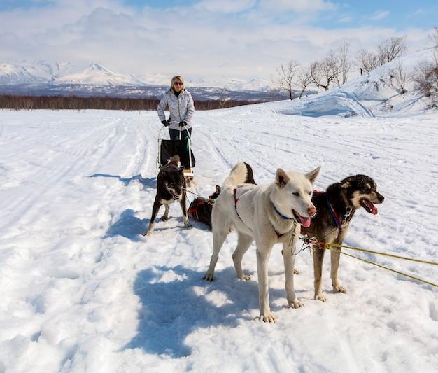 Husky in harnas rustend op de sneeuw op kamtsjatka