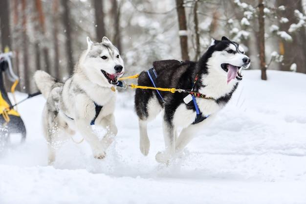 Husky sledehonden in harnas rennen en trekken hondenbestuurder. wintersport kampioenschap competition.ti