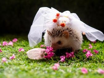 Huwelijksconcept door egel