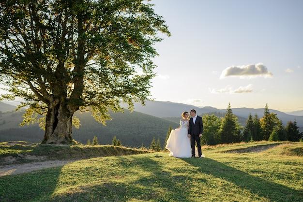 Huwelijksfotografie in de bergen. de bruid en bruidegom houden de hand bij de oude 100 jaar oude beuk. zonsondergang.