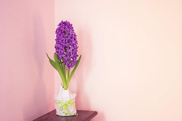 Hyacintbloem in een pot staat op het nachtkastje tegen de achtergrond van een roze muur
