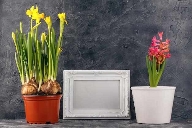 Hyacinten en narcissen in bloempotten en witte fotolijst