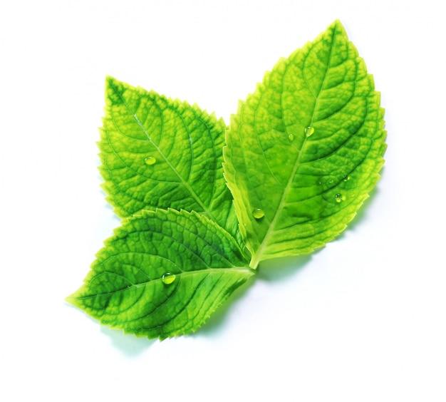 Hydenyia bloem groen fris blad met regendruppel