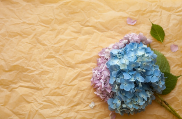 Hydrangea hortensiabloemen tegen verfrommelde document achtergrond. copyspace