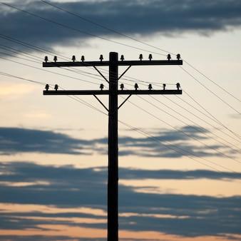 Hydro elektrische paal tegen de avondhemel in meer van het hout, ontario
