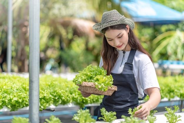 Hydrocultuur groenteboerderij. jonge aziatische vrouw glimlach oogst groenten van haar hydrocultuur boerderij.