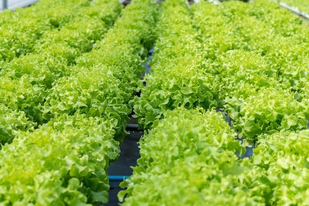 Hydrocultuur groenteboerderij.
