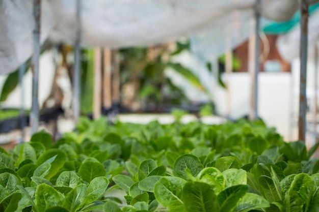Hydrocultuurmethode voor het kweken van planten met minerale voedingsoplossingen