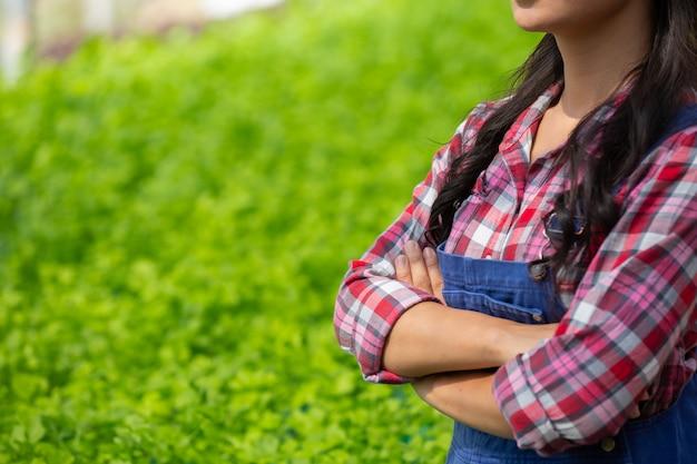 Hydrocultuursysteem, groenten en kruiden planten zonder de bodem te gebruiken voor de gezondheid
