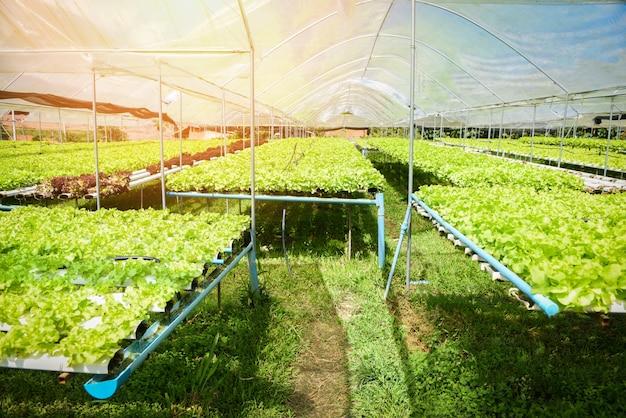 Hydroponic boerderij salade planten plantaardige groene eiken slasalade