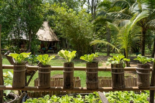 Hydroponic plantation maken van aard