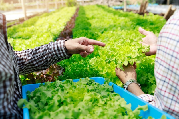 Hydroponics farm, worker oogst en verzamel omgevingsgegevens van biologische slagroenten in de tuin van de serreboerderij.
