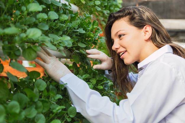 Hydroponische rakettenboerderij. vrouw werkt op de hydrocultuurboerderij. frisse en gezonde rucola.