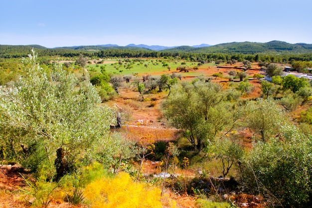Ibiza-eilandlandschap met landbouwgebieden
