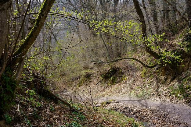 Idyllisch herfstlandschap met bomen met kale takken en een pad bedekt met afgevallen bladeren