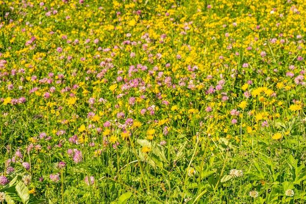 Idyllisch landschap met kleurrijke wilde bloemen in de alpen