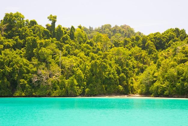 Idyllisch strand langs wilde kustlijn met tropisch bos, indonesië