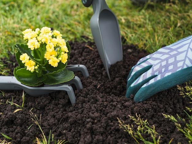 Iemands hand die grond graaft voor het planten van zaailingen