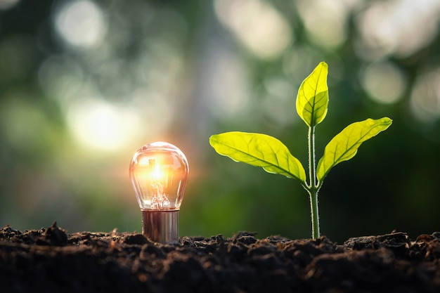 Ightbulb met kleine boom op grond in aard en zonneschijn. concept besparing