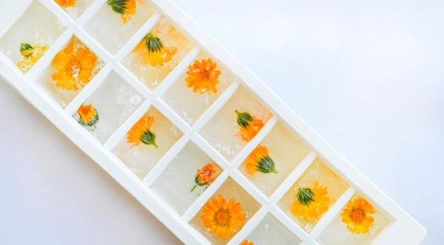 Ijsblokjesbakje met bevroren calendula bloemen geïsoleerd op een witte achtergrond. bovenaanzicht