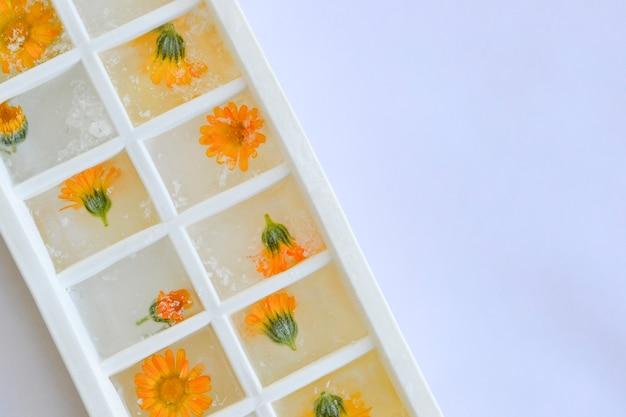 Ijsblokjesbakje met bevroren calendula bloemen geïsoleerd op lichte achtergrond. bovenaanzicht