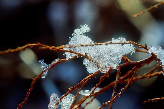 Ijskegels opknoping van de takken als gevolg van de smeltende sneeuw