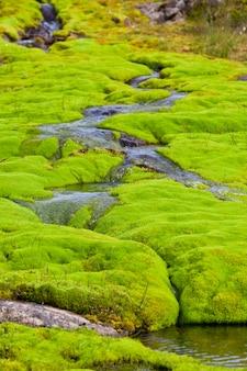 Ijsland kleine rivierstroom met groen mos.