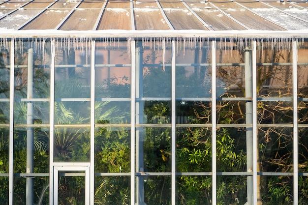 Ijspegels opknoping van een tropische kas op het dak in de winter op een zonnige ijzige dag.