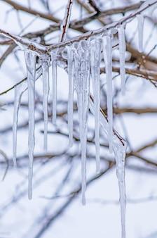 Ijzige boomtak. ijskegel bevroren op een tak van een boom