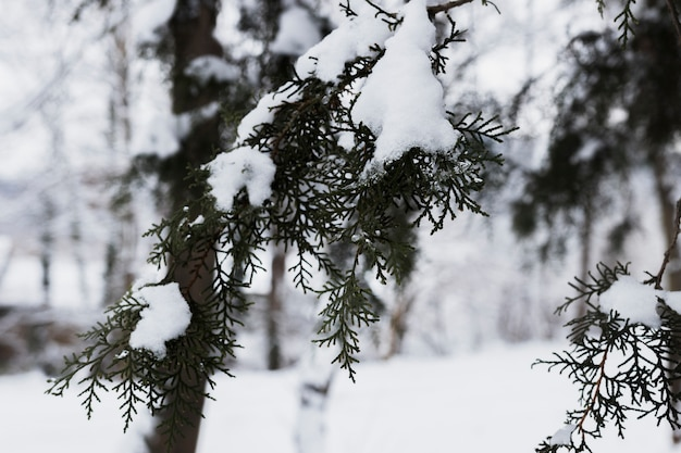 Ijzige boomtakken in de winter