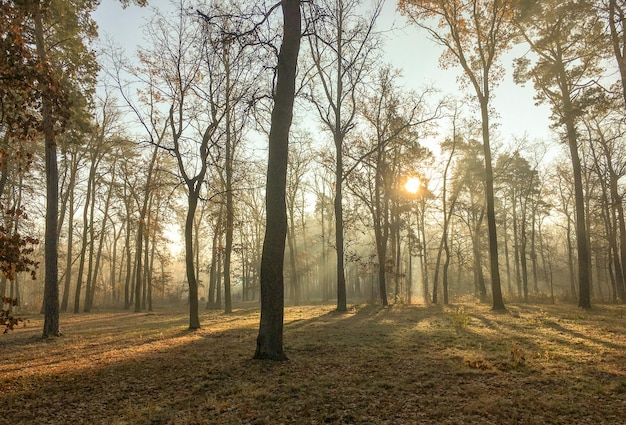 Ijzige, frisse ochtend in een prachtig herfstpark van een klein stadje. achtergrond