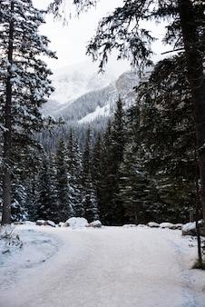 Ijzige weg tussen rijen besneeuwde bomen