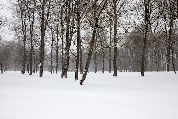 Ijzige winter na sneeuwval met kale loofbomen, winterweer in het park of bos en loofbomen, loofbomen in de winter