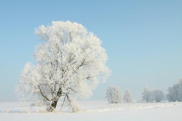 Ijzige winterboom in het veld in een wolkenloze ochtend