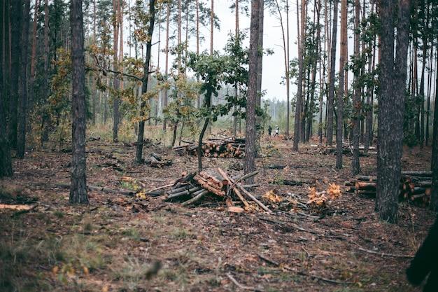 Illegaal kappen van bos en bomen in een wildpark