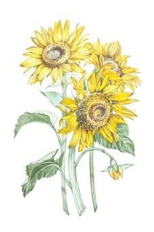 Illustratie in waterverf van zonnebloemen. floral kaart met bloemen. botanische illustratie.