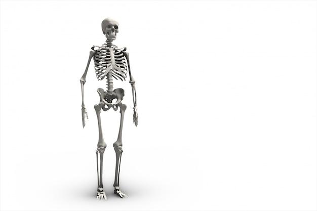 Illustratie van een menselijk skelet 3d-rendering