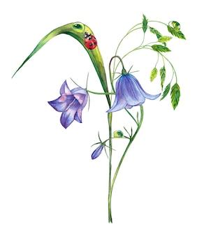 Illustratie van groen gras met aartje, paarse klokje en lieveheersbeestje. aquarel.