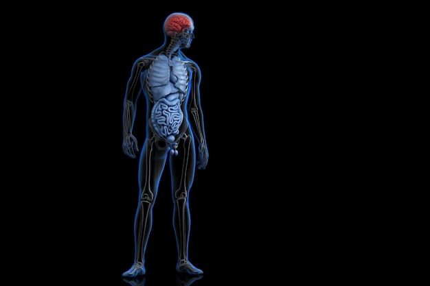 Illustratie van menselijke anatomie met gemarkeerde hersenen. 3d illustratie. bevat clipping path