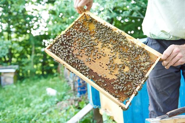 Imker aan het werk in zijn bijenstal met honingraatframe