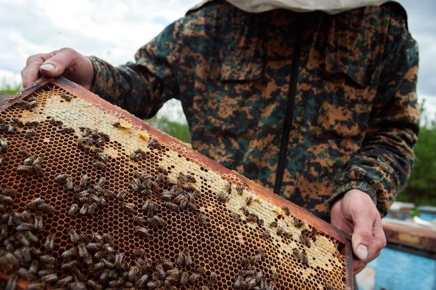 Imker bedrijf frame van honingraat met bijen. imker in beschermende werkkleding die honingraat inspecteert