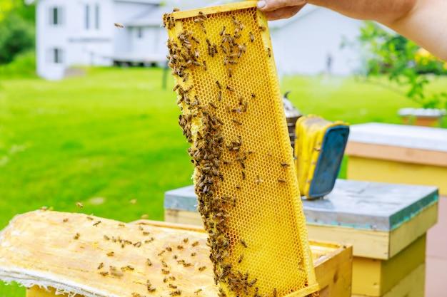 Imker controleert een kolonie bijen in de buurt van de korf tijdens de vlucht op een mooie zonnige dag