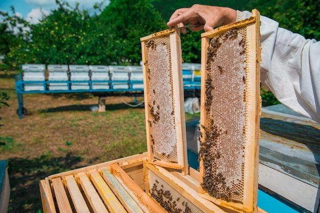 Imker die bijenkorven met honing houdt. hoge kwaliteit foto