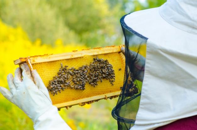Imker die een honingraathoogtepunt van bijen houdt