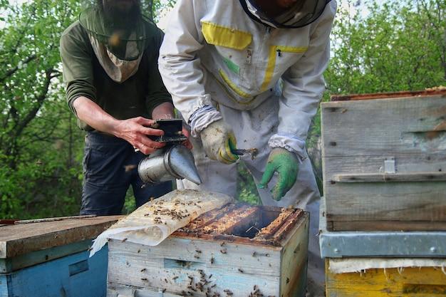 Imker in handschoenen en imker kostuum controleert bijenkorven met bijen, bereidt zich voor op het verzamelen van honing, zorgt voor frames met honingraten