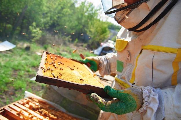 Imker in handschoenen en imker kostuum controleert bijenkorven met bijen