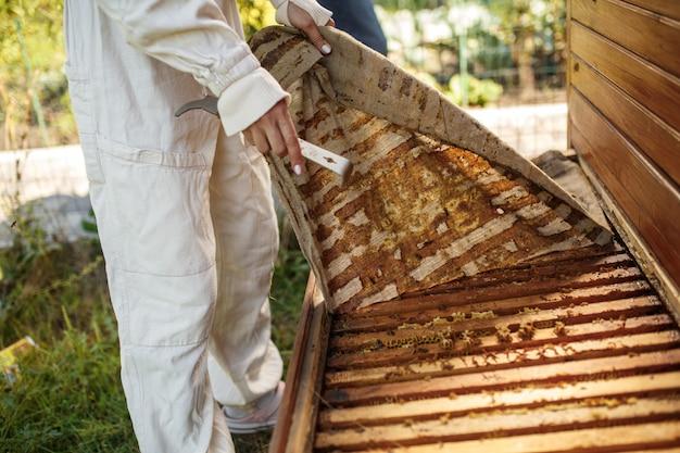 Imker in pak werkt bij bijenteelt. houten bijenkorf openen