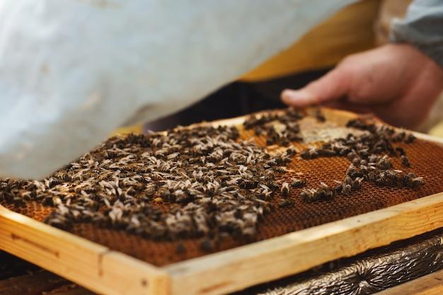 Imker inspecting bee hive na de winter